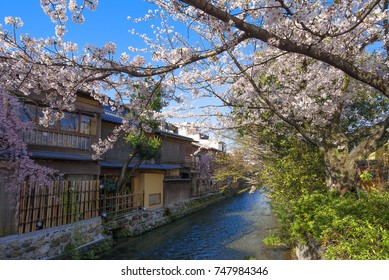 The Shirakawa River with cherry blossoms in Gion district, Kyoto, Japan.