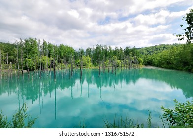 The Shirogane Blue Pond during summer season in Biei, Hokkaido, Japan.