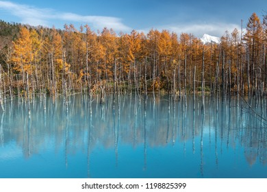 Shirogane Blue Pond the blue water of the colloidal aluminium hydroxide in autumn moment, Biei, Hokkaido, Japan