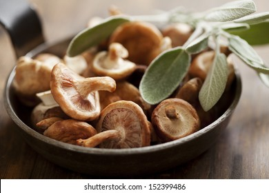 Pilzschüttelpilze, die mit Salbei gekocht werden können