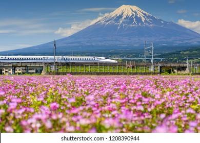 Shizuoka, Japan - May 05, 2017:  JR Shinkansen transport through Mt. Fuji and Shibazakura at spring. N700 Bullet train transit between Tokyo and Osaka operated by Japan Railways company.