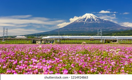 Shizuoka, Japan - May 05, 2017:  Shinkansen transport through Mt. Fuji and Shibazakura at spring. JR Bullet train or super high speed railway operated by Japan Railway company.