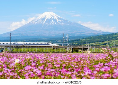 SHIZUOKA, JAPAN - MAY 05, 2017: JR Bullet train or Shinkansen, passes Mt. Fuji and Shibazakura at spring.