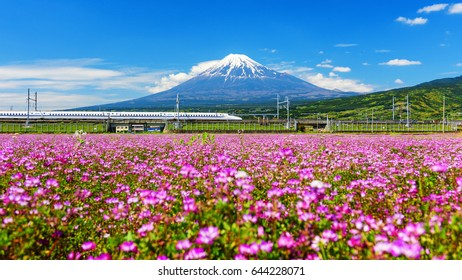 SHIZUOKA, JAPAN - MAY 05, 2017:  Shinkansen or Bullet train run pass Mount Fuji and Shibazakura at spring. Shinkansen, super high speed railway, operated by Japan Railways companies.