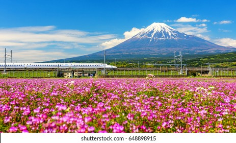 SHIZUOKA, JAPAN - MAY 05, 2017:  Shinkansen or Bullet train run pass through Mt. Fuji and Shibazakura at spring. Shinkansen, super high speed railway, operated by Japan Railways companies.