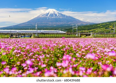 SHIZUOKA, JAPAN - MAY 05, 2017: Shinkansen or JR Bullet train run pass through Mt. Fuji and Shibazakura at spring. Shinkansen, super high speed railway, operated by Japan Railways companies.