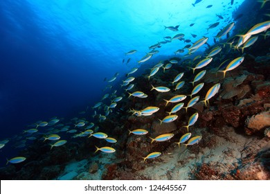 Shoal of fish in the coral reef