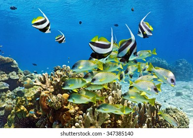 Shoal of fish on the coral reef