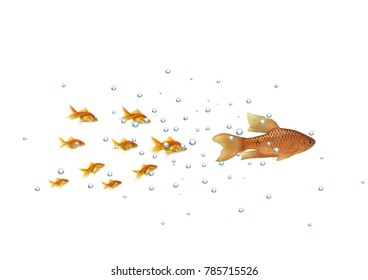 the shoal gold fish flowing for larger