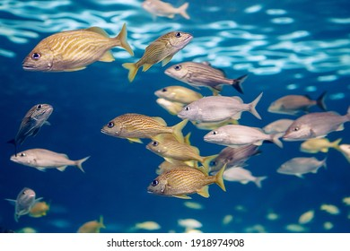 Shoal group of tiny small tropical fish under water in aquarium. Sea ocean marine wildlife animals swimming in blue water. Underwater life. Water nature fauna background wallpaper.