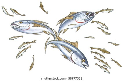 Shoal mackerel on hunting.
