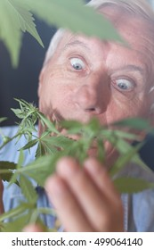 Shocked senior man looking at Cannabis plant.
