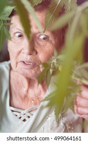 Shocked senior woman looking at Cannabis plant.