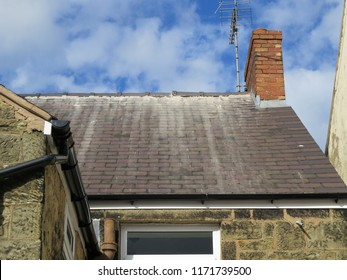 Shoddy roofing work by cowboy builder. Results of rogue worker posing as skilled tradesman. Badly pointed ridge tiles on slate roof, mortar running down tiles.