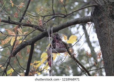 Shoes hanging high above in a tree.