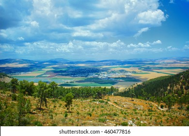A shoot of the Gilboa's mountain, Israel
