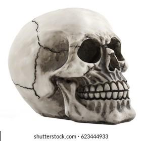 shoot of skull isolated on white background