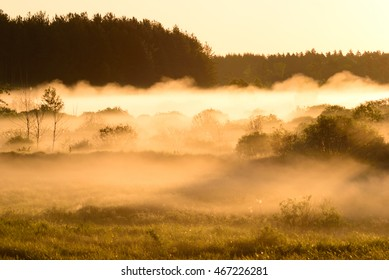 Shoot of surrounding forest in morning moving fog and with sunrise on horizon