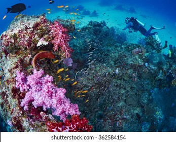 Shooting reef fish and coral grouper with diver, similan island, Thailand