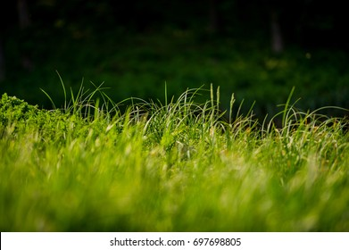 Shoots of a young green grass on a dark blurry background in the park