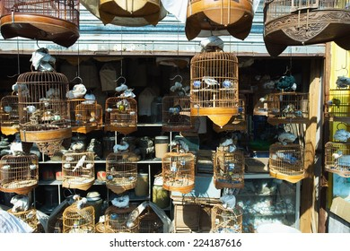 Shop full of birds and birdcages