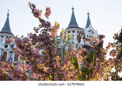 A shop in a park surrounded by trees and flowers