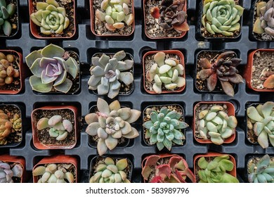 Shopping for baby succulents in California.