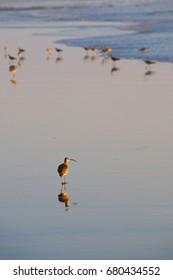 Shore bird reflection