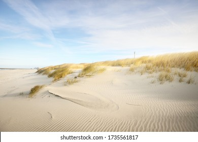 The shore (desert) of Anholt island under the bright blue sky with cirrus clouds. Sand dunes and plants (Ammophila) close-up. Environmental conservation, eco tourism theme. Kattegat, Denmark