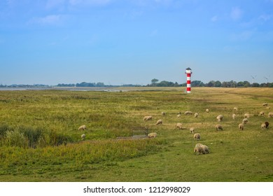 Shore and dike of  Elbe river near Gluckstadt, grazing sheeep, small lighthouse