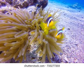 Shore Dive in Eilat Israel