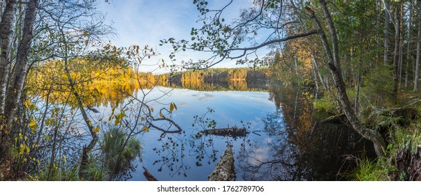The shore of the forest lake at sunrise. Panorama. Autumn landscape.