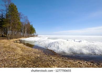 Shore of Ladoga lake, Sunny April day. Leningrad region, Russia