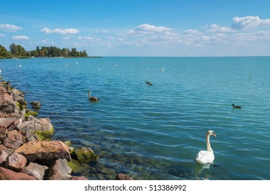Shore of Lake Balaton in Balatonfured with birds, Hungary