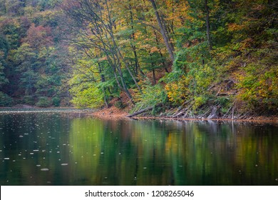 Shore of the lake during autumn, green and yellow leaves above the water