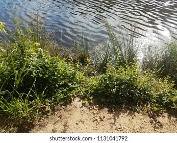 shore of a lake with mud and green plants