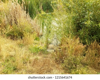 shore of lake or pond with rocks, grasses, and plants