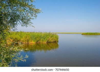 Shore of a lake in sunlight in summer