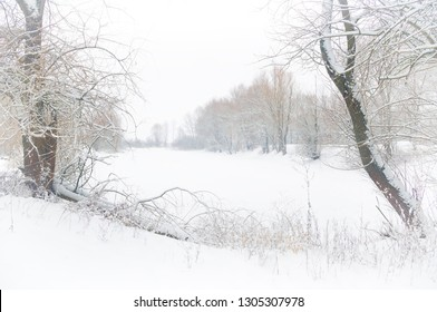 The shore of the lake in the winter. Bushes and trees covered with snow.