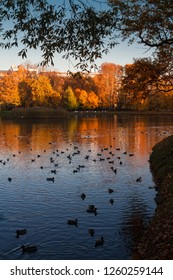 The shore of the pond in the autumn city Park, covered with yellow autumn leaves