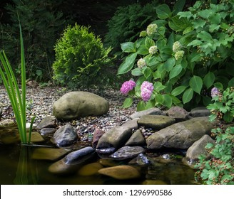 The shore of the pond with large stones, with blooming pink hydrangea. In the background of the garden pond grow evergreens. Sunny day. There is a place for text.
