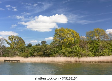 Shore of the Schlei, an inlet of the Baltic Sea with trees and reed, near the village Missunde. Schleswig-Holstein, Germany, with blue sky and clouds.