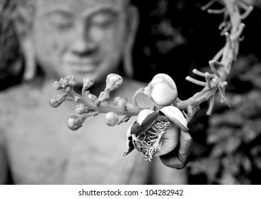 Shorea Robus flowers and Buddha Statue in Royal Palace of Cambodia
