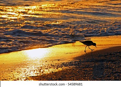 shorebird Sanibel Island Florida beach at sunset