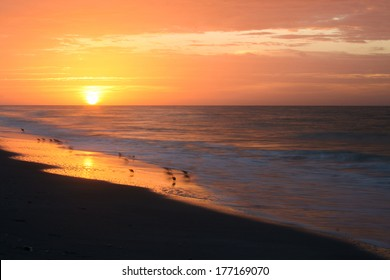 Shorebirds on the beach with the sun rising in the background.  Tarpon Bay Beach, Sanibel Island, FL, USA.