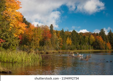 A shoreline explodes with vivid color on a bright autumn day.