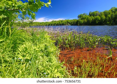 Shoreline landscape at Little Horsehead Lake on a summer day in northwoods Wisconsin