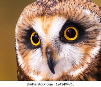 Búho Imágenes Fotos Y Vectores De Stock Shutterstock