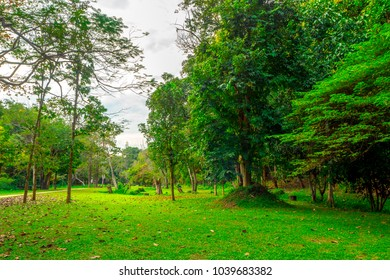 short green glass and beautiful trees in the peaceful, quiet park, perfect place for family and friends to come for picnic to relax. a park near deep forest with lots of tall trees.