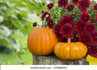 Short and tall mini pumpkins on wood stump with burgundy mums